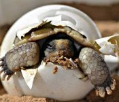 Turtle birth