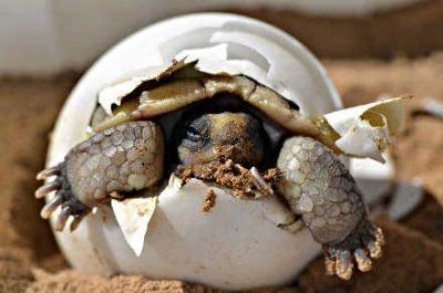 Turtle birth